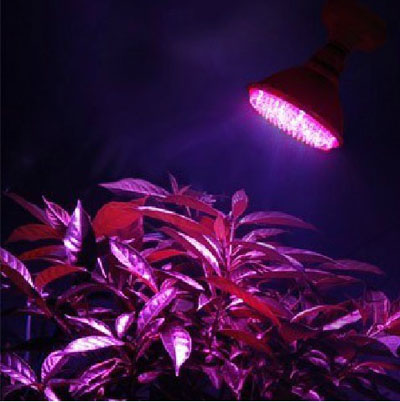 Led Grow Light in NZ